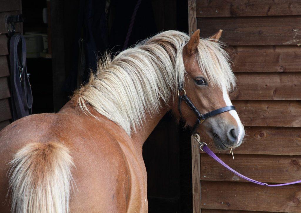 Ponys entnehmen Videos soziale Informationen