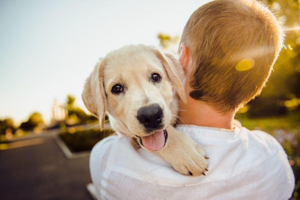 Bei Begegnungen mit Fremden orientieren sich Hunde an ihrer Bezugsperson