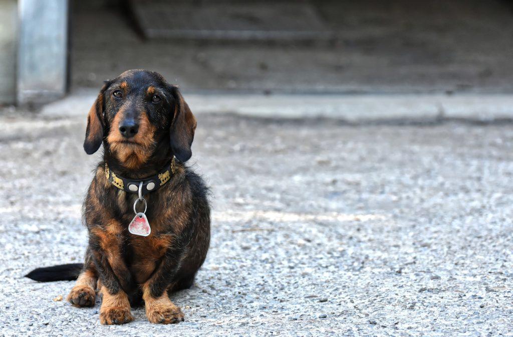 Orientieren sich Hunde am Erdmagnetfeld?