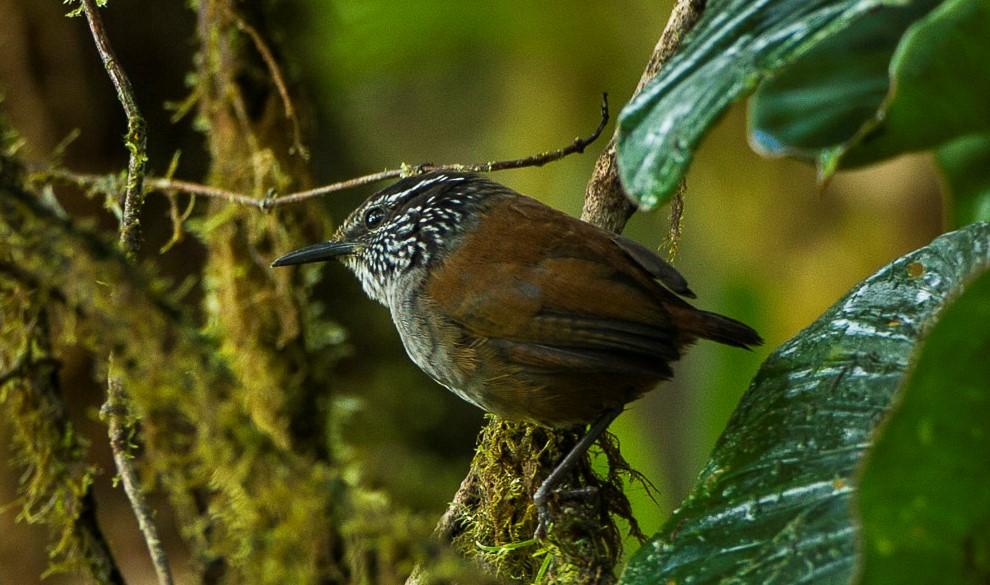 Manche Tropenvögel verzichten während einer Dürre auf die Fortpflanzung.