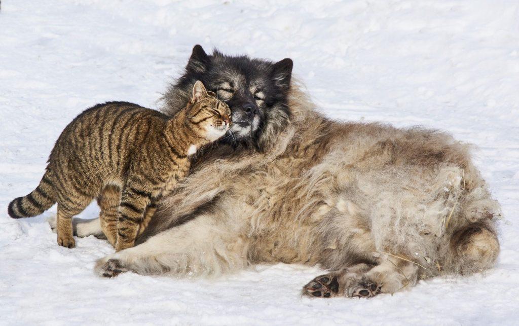 Sorgen Pheromon-Präparate für ein harmonischeres Zusammenleben zwischen Hund und Katze?