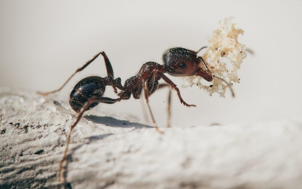 Ameisen verwenden Werkzeuge