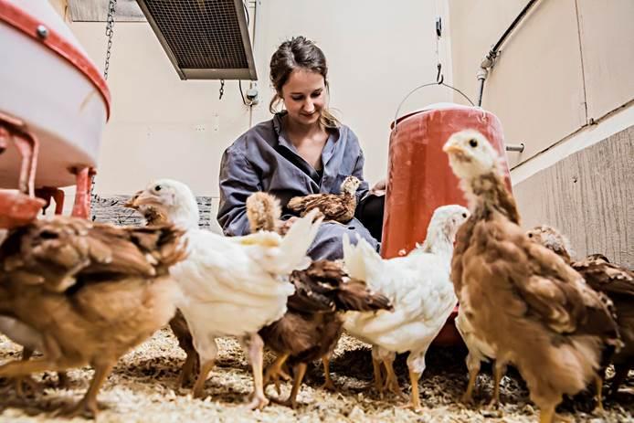 """""""Hühner verdienen mehr Respekt!"""", findet Anissa Dudde."""
