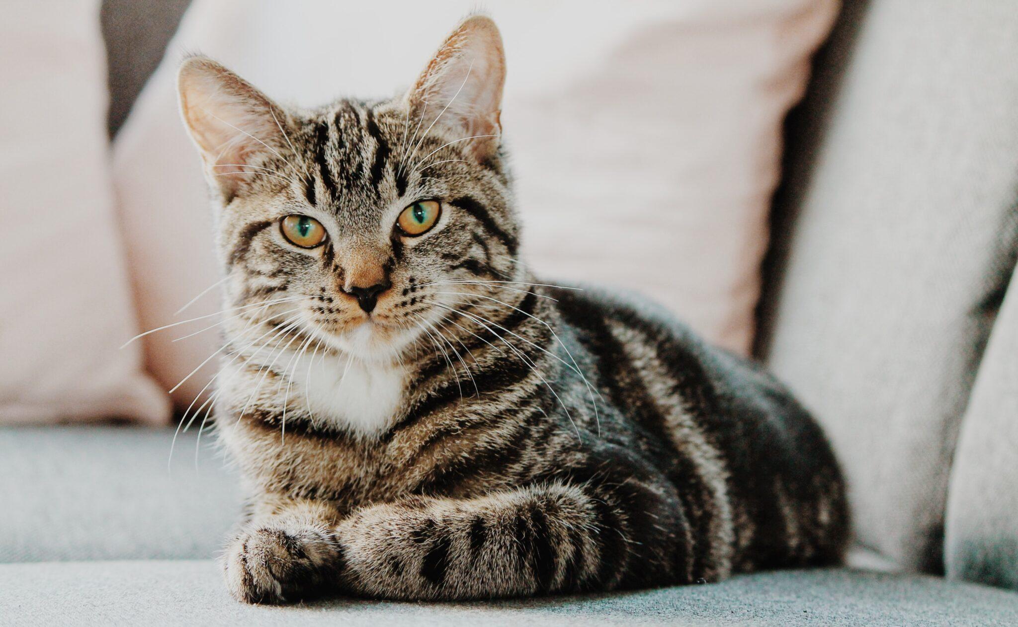 Die Katzen verhielten sich im Experiment unvoreingenommen