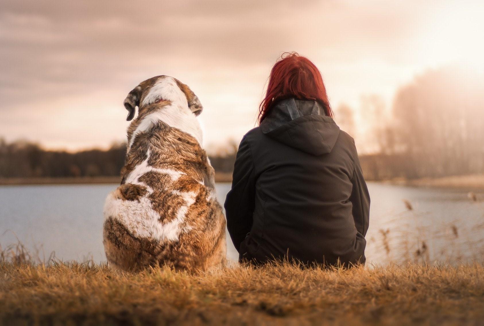 Hunde und Menschen verbindet eine besondere Beziehung. Doch wann begann die Domestikation?