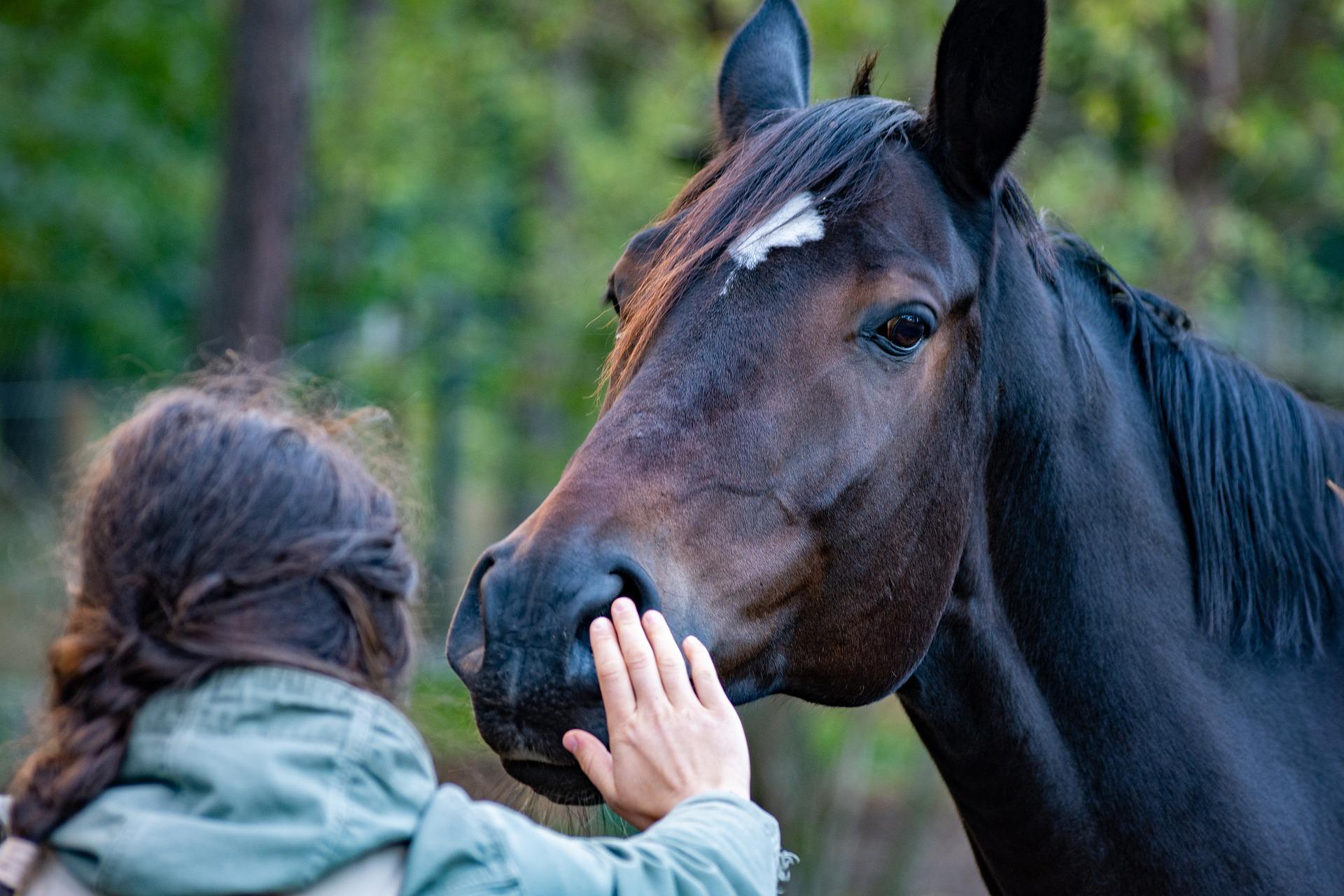 Babysprache wirkt bei Pferden