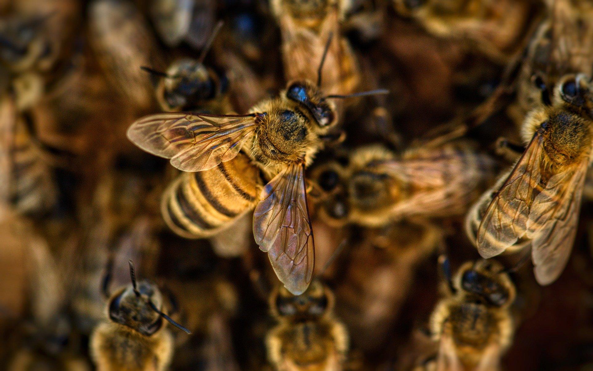 Meisterinnen der Orientierung: Honigbienen