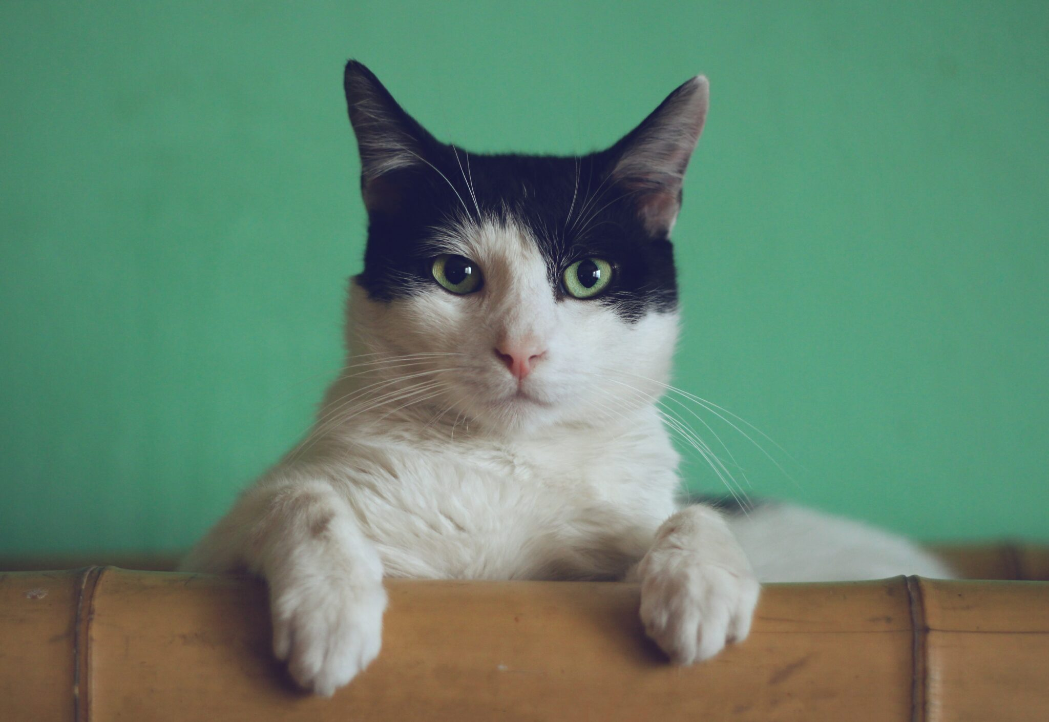 Fraßen bevorzugt leicht zugängliches Futter: Katzen
