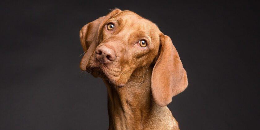 Der beste Freund des Menschen: Wie gut verstehen Hunde uns wirklich?